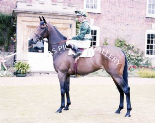 Scintillate with Pat Eddery (696-03)